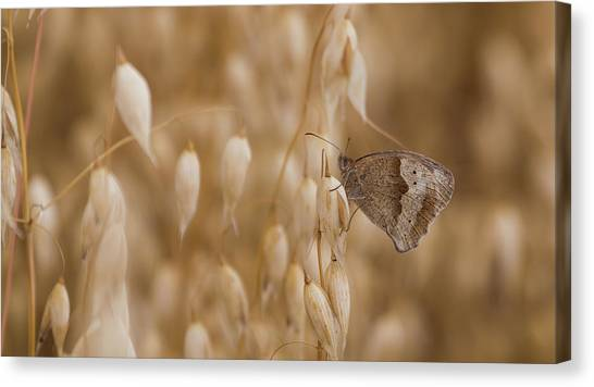 Meadow Brown Roosting Canvas Print
