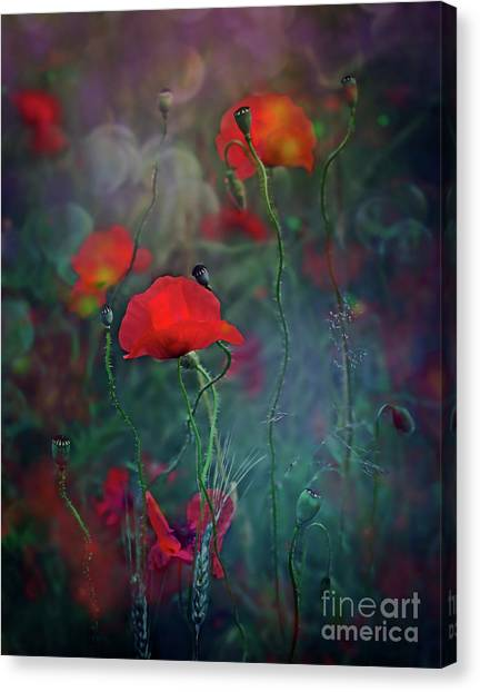Meadow In Another Dimension Canvas Print
