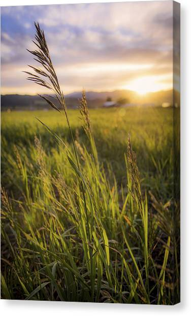 Idaho Canvas Print - Meadow Light by Chad Dutson