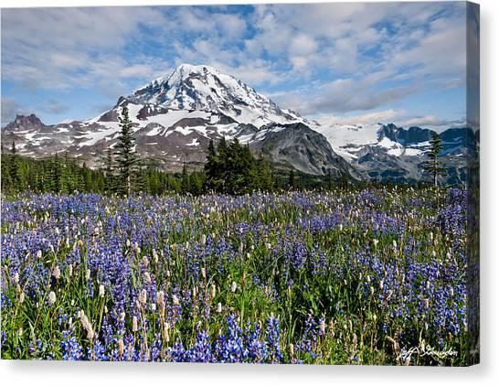 Meadow Of Lupine Near Mount Rainier Canvas Print