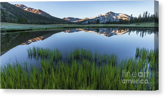 Meadow Reflections  Canvas Print