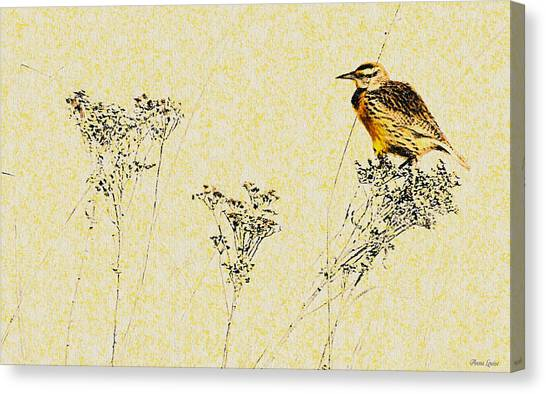 Meadowlark In Kansas Prairie 1 Canvas Print