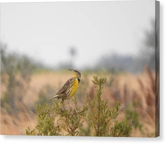 Canvas Print - Meadowlark No Lemon by Red Cross