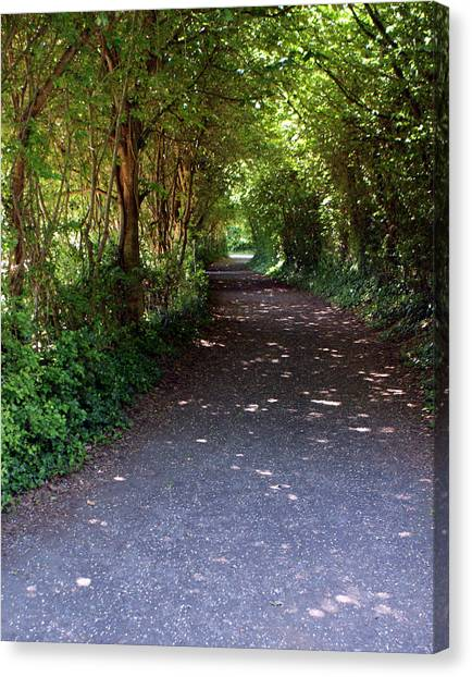 Meandering Way Canvas Print by Michael  Cryer