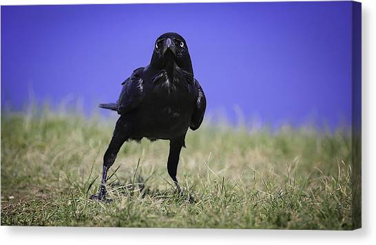Menacing Crow Canvas Print