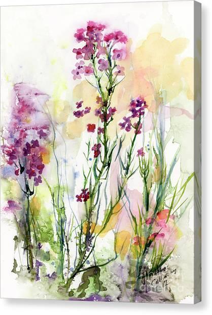 Medicinal Wild Flowers Dames Rocket Hesperus Matronalis Canvas Print