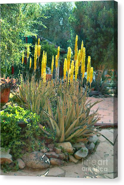 Medicine Aloes In Bloom Canvas Print