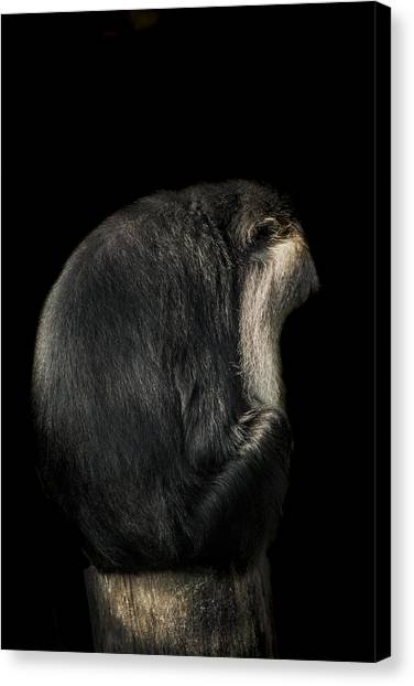 Primates Canvas Print - Meditation by Paul Neville