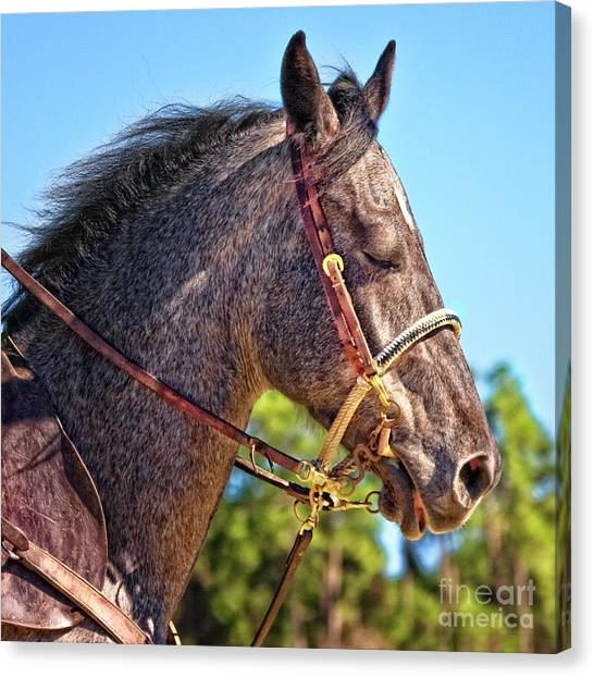Meditative Horse Canvas Print