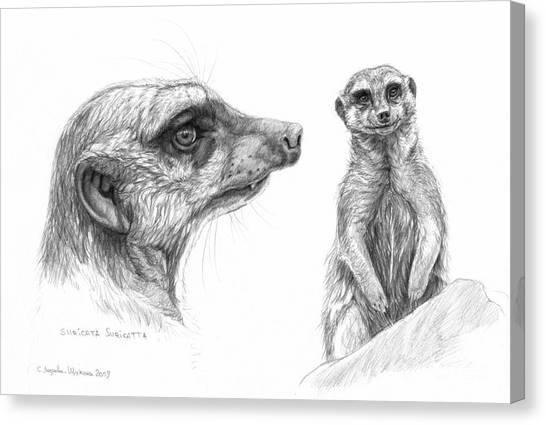 Meerkat - Suricata Suricatta Canvas Print by Svetlana Ledneva-Schukina