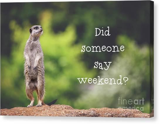 Meerkats Canvas Print - Meerkat Asking If It's The Weekend Yet by Jane Rix