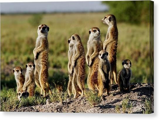 Meerkat Family Canvas Print