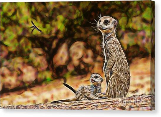 Meerkat Canvas Print - Meerkat by Marvin Blaine