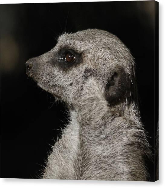 Meerkats Canvas Print - Meerkat Profile by Ernie Echols