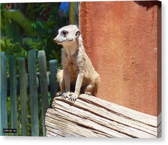 Meerkat Canvas Print - Meerkat Sentry by Methune Hively