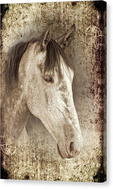 Meet The Andalucian Canvas Print
