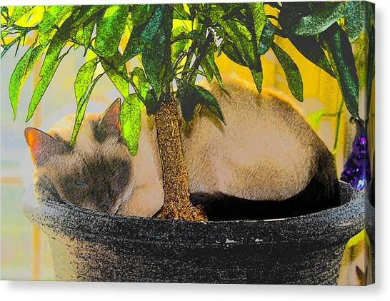 Meezer Tree Canvas Print