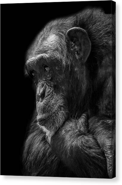Primates Canvas Print - Melancholy by Paul Neville