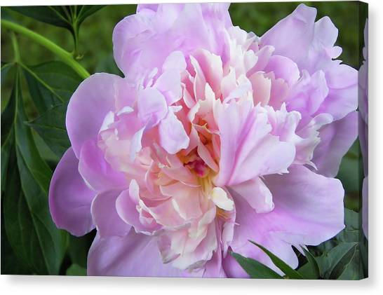 Melissa's Flower Canvas Print by JAMART Photography