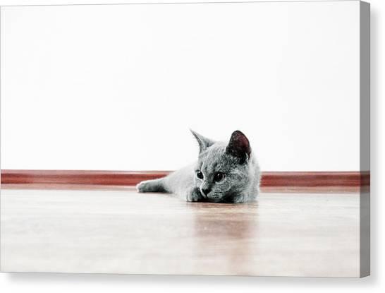 Scottish Folds Canvas Print - Scottish Fold Cat by Tianxin Zheng