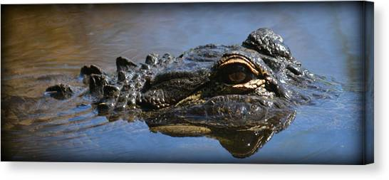Menacing Alligator Canvas Print