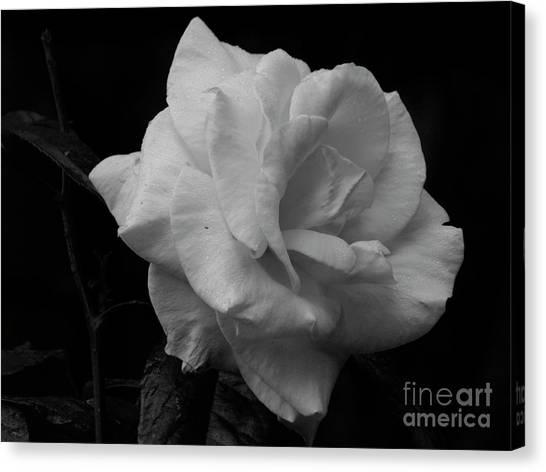 Mendocino Rose01 Canvas Print