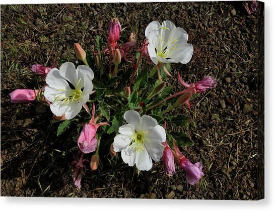 Mesa Blooms Canvas Print