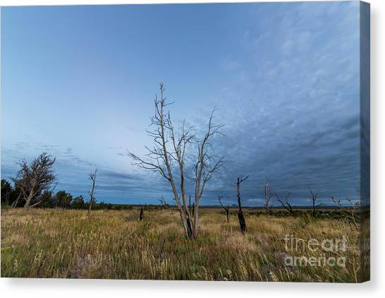 Verde Canvas Print - Mesa Verde At Dawn by Twenty Two North Photography