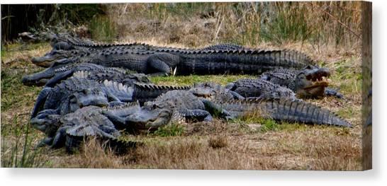 Mess 'o Alligators Canvas Print