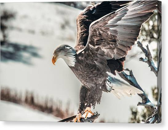 Metallic Bald Eagle  Canvas Print