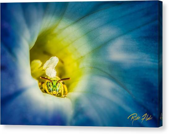 Metallic Green Bee In Blue Morning Glory Canvas Print