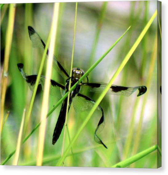 Just Emerged Canvas Print