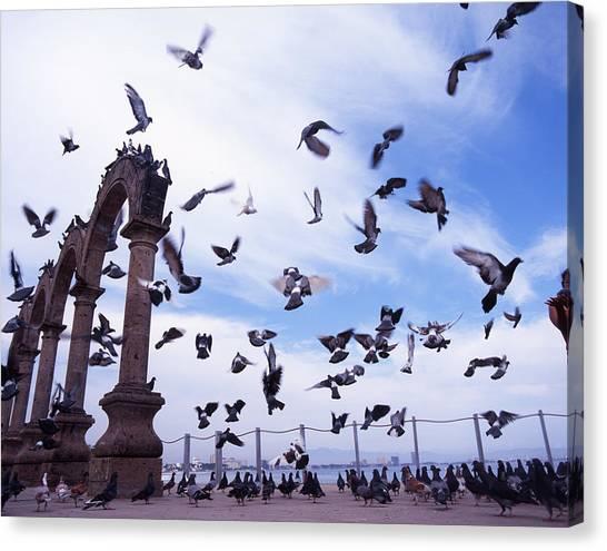 Mexican Pigeon Ruins Canvas Print by Benjamin Garvey