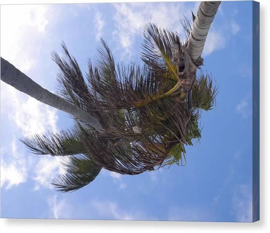 Miami Palms Canvas Print by JAMART Photography