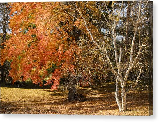 Michigan Autumn 1 Canvas Print
