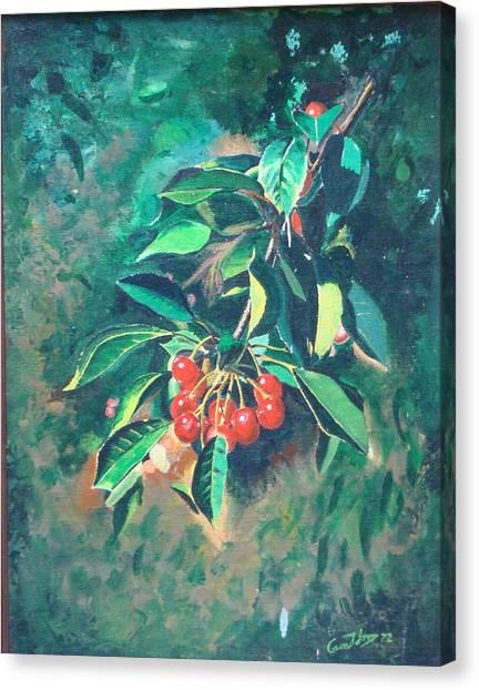 Michigan Cherries Canvas Print