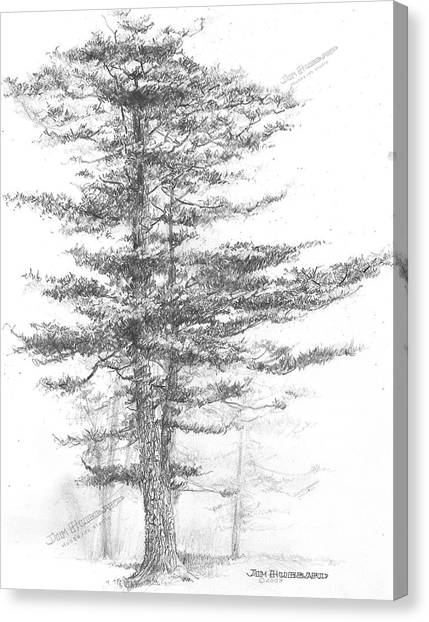 Michigan-eastern White Pine Canvas Print