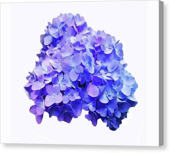 Canvas Print featuring the photograph Mid-summer Blue by Roger Bester