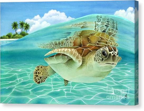 Tortoises Canvas Print - Midday At The Oasis by Carolyn Steele