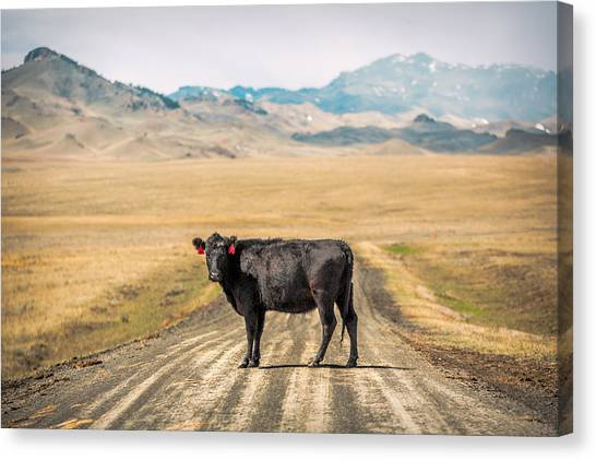 Cow Canvas Print - Middle Of The Road by Todd Klassy