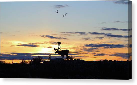 Northwest Territories Canvas Print - Midnight Caribou Sunset by Nick Laferriere