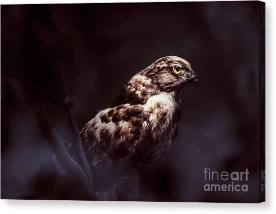 Falcons Canvas Print - Midnight Hawk by Jorgo Photography - Wall Art Gallery