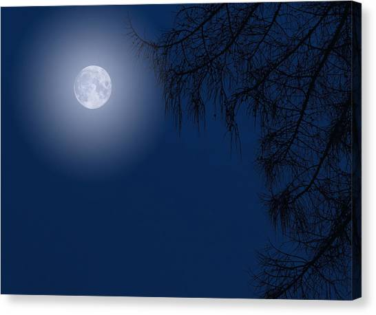 Midnight Moon And Night Tree Silhouette Canvas Print