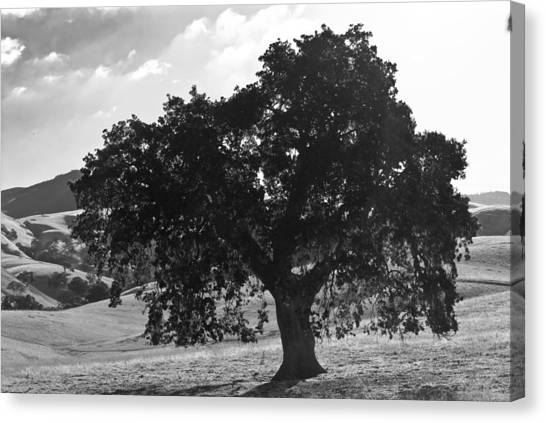 Mighty The Oak Canvas Print