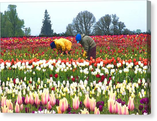 Migrant Workers In The Tulip Fields Canvas Print by Margaret Hood