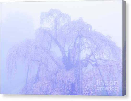 Miharu Takizakura Weeping Cherry01 Canvas Print
