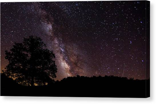 Milky Way And The Tree Canvas Print