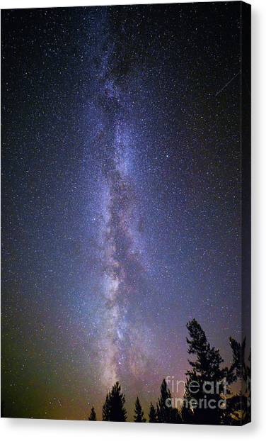 Milky Way Over The Pines Canvas Print