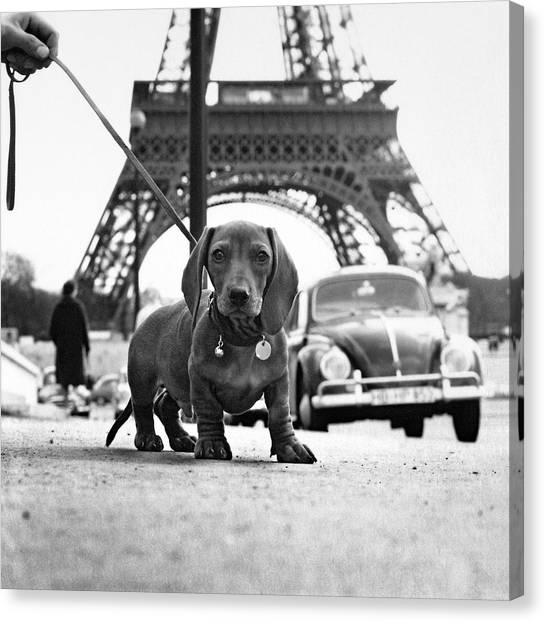 Paris Canvas Print - Milo Mon Chien by Hans Mauli