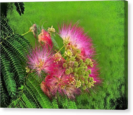 Mimosa II Canvas Print by James Granberry